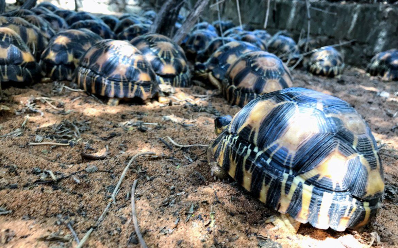 Schildpadden Ifaty