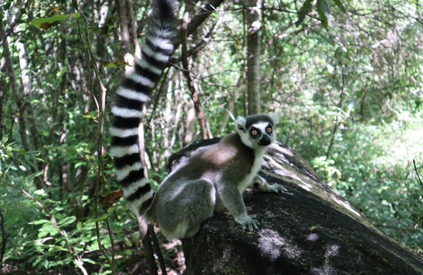 Madagaskar | Betsileo country Lodge en Anja Community Reserve (park Anja)