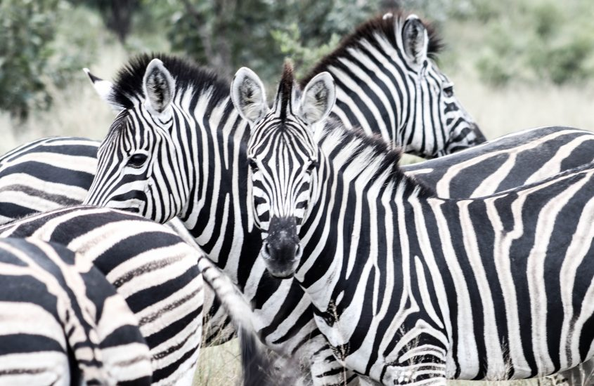 Zuid Afrika | Krugerpark | 10 tips voor beginnende dierenspotters