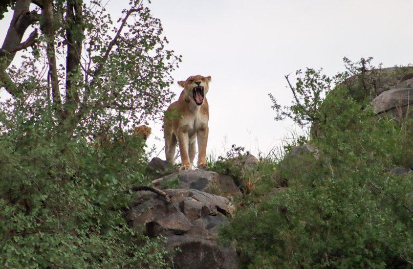 Top 8 beste parken in zuid- en oost Afrika om dieren te spotten (+ TIPS!)